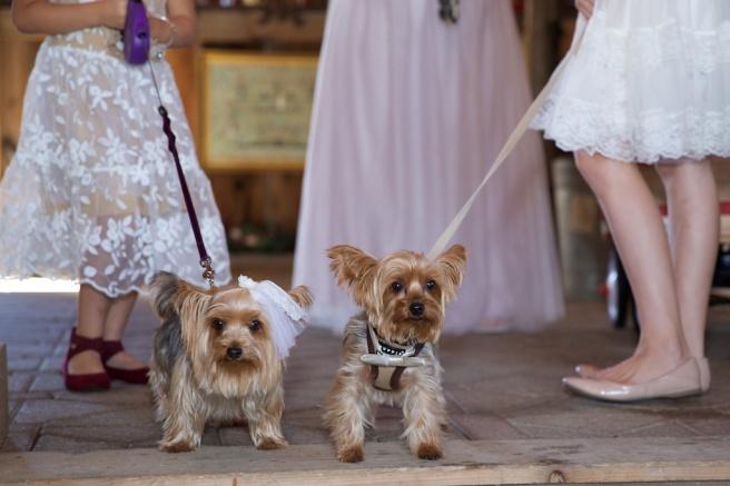 Chantelle Marie Lakehouse Auburn Wedding Photography 149.jpg